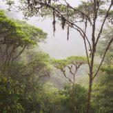 Camuflado entre los árboles 14