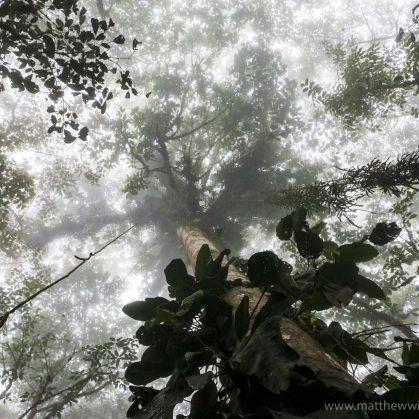 Camuflado entre los árboles 2