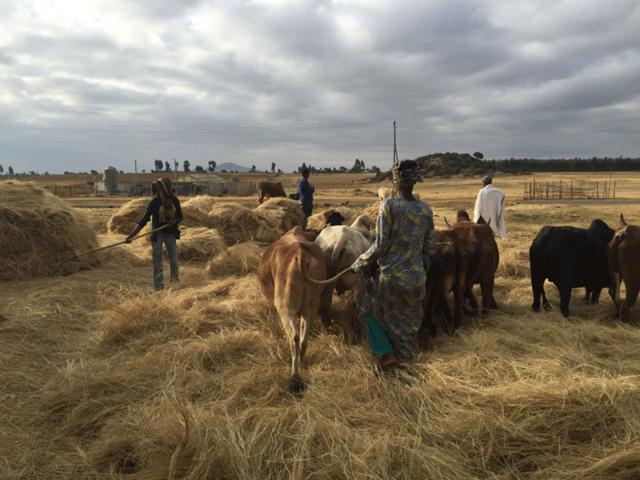 De Etiopía al mundo 6