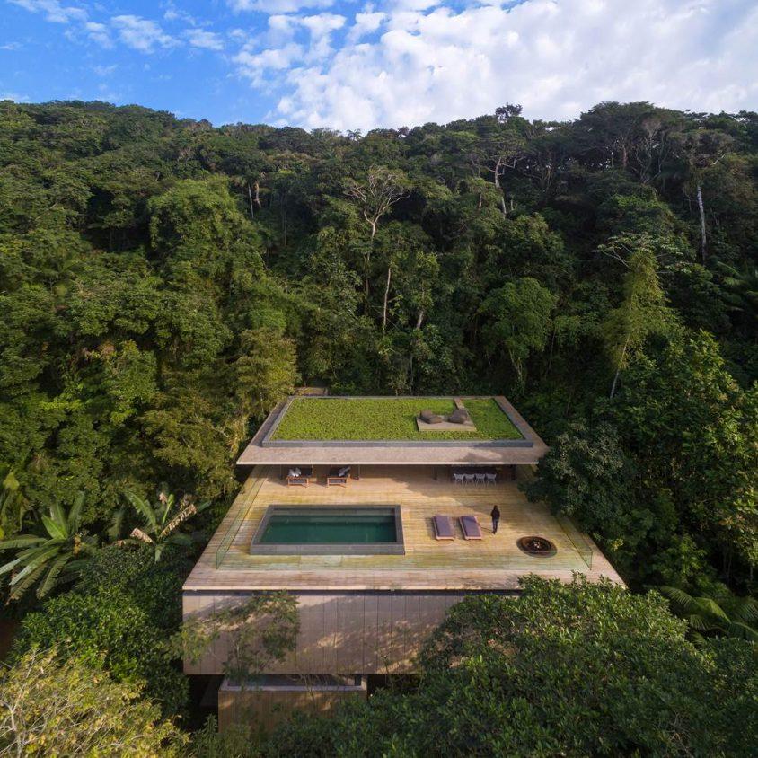 Despertarse en la selva 2