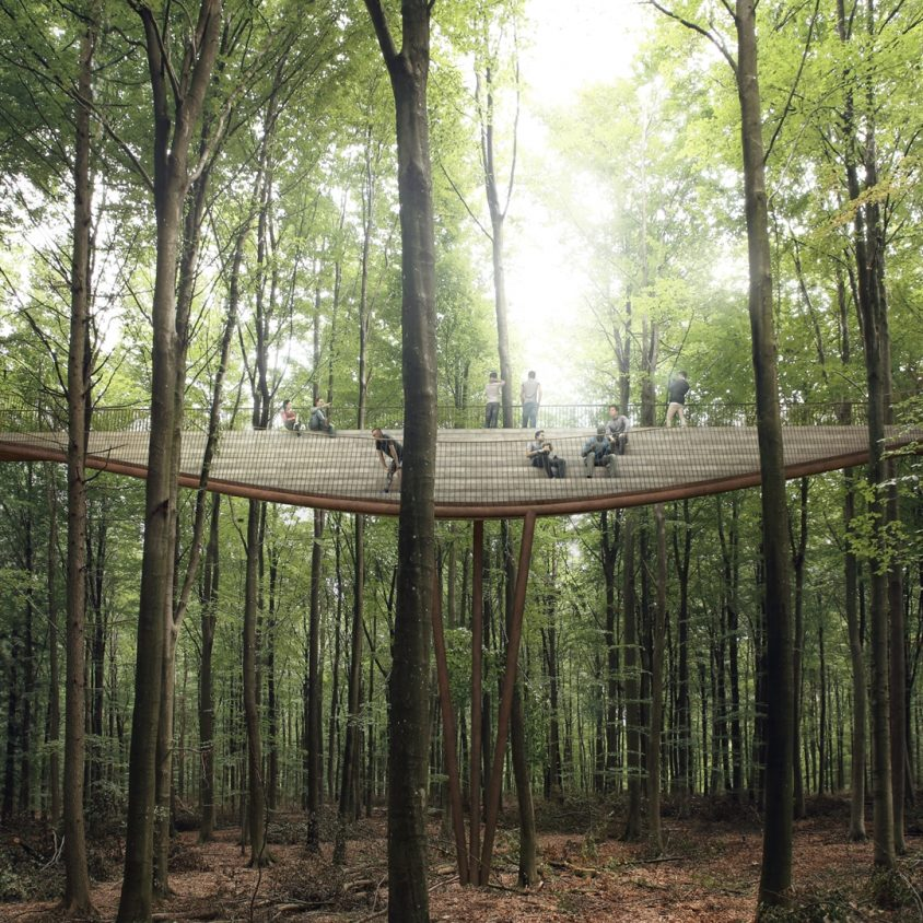 The Treetop Experience 7