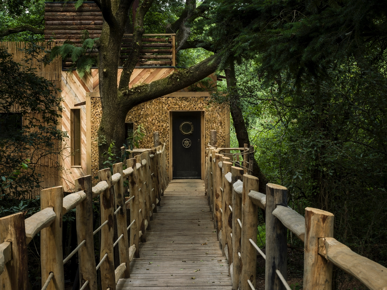 La casa del árbol 19