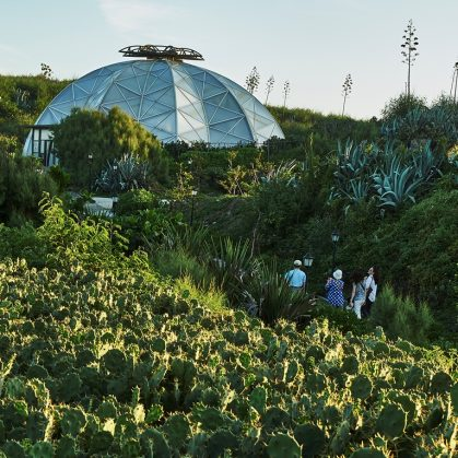 Cactus Park 8