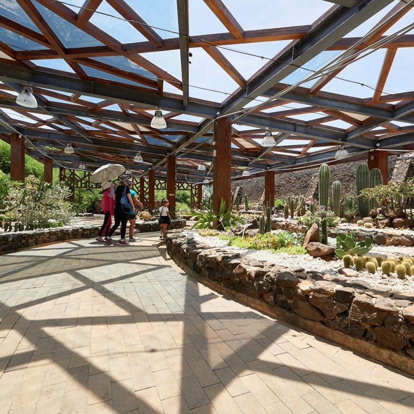Cactus Park 5