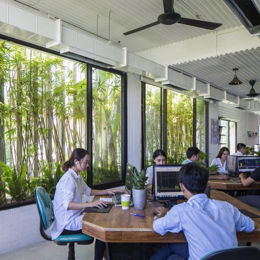 Oficinas y Jardines 7