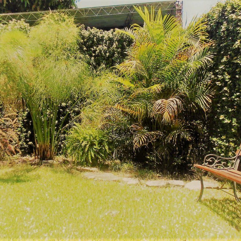 Cómo diseñar el jardín ideal 1