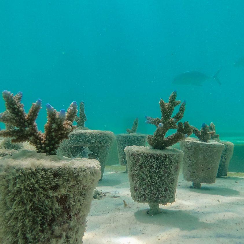 The Sculpture Coralarium, un museo en el agua 21