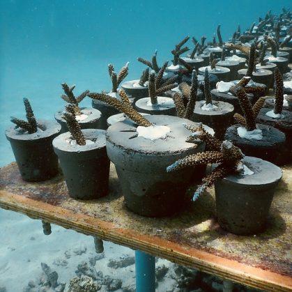 The Sculpture Coralarium, un museo en el agua 24