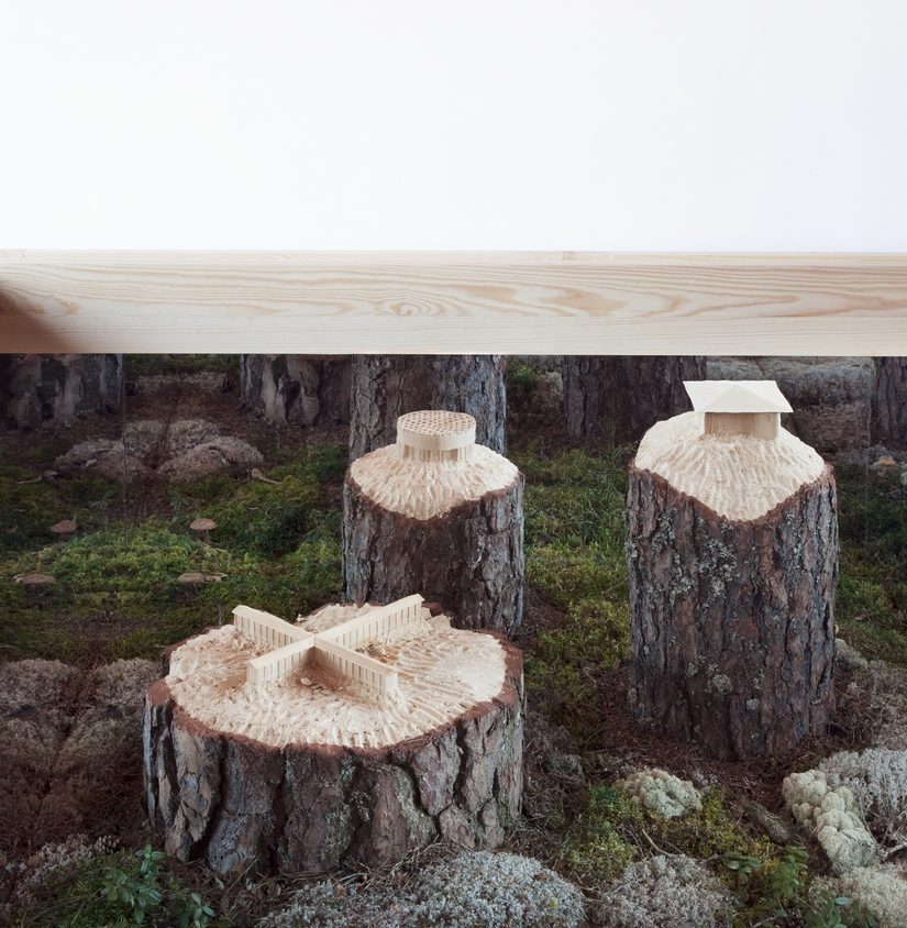 Arte tallado sobre árboles 2