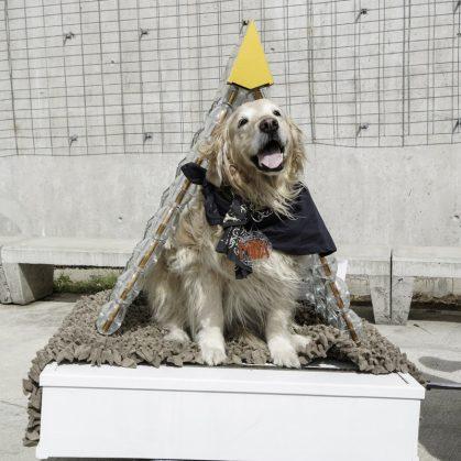 """Una tarde excepcional para """"Casas de perros"""" 16"""