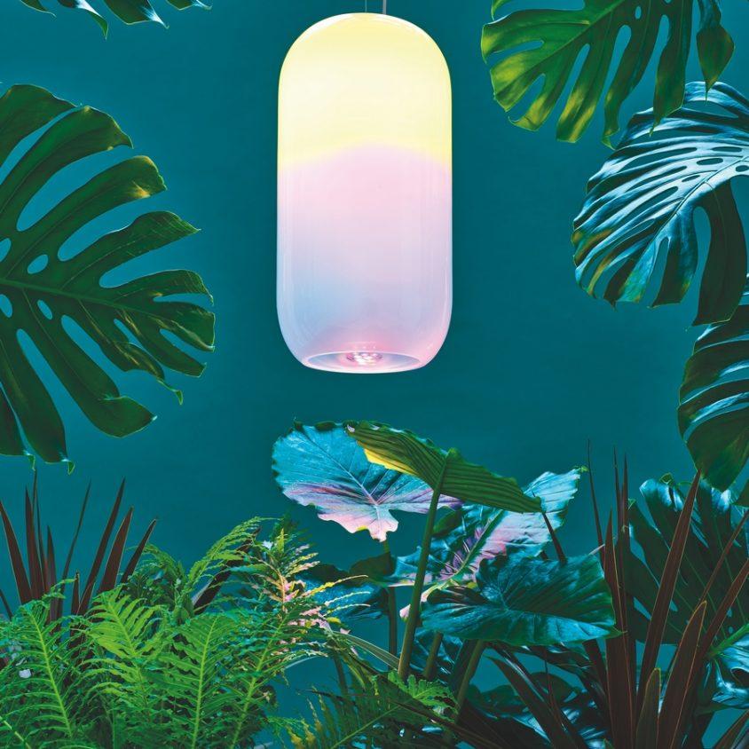 Una lámpara para la naturaleza 5