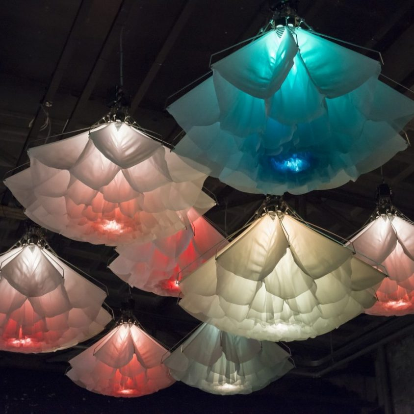Cuando las lámparas florecen 2