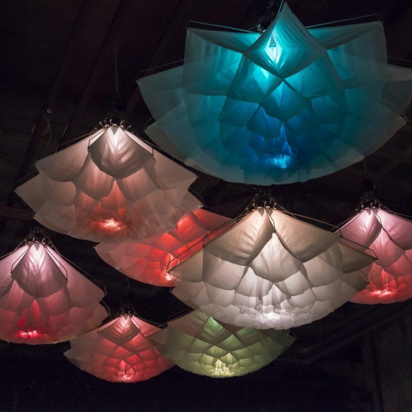 Cuando las lámparas florecen 3