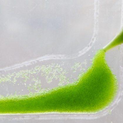 Una cortina bio-digital ecológica 6