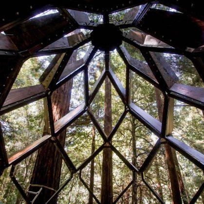 La casa de árbol con forma de piña 4