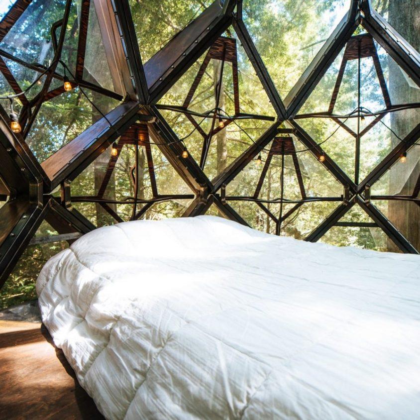La casa de árbol con forma de piña 18