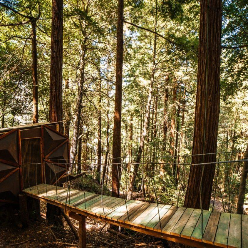 La casa de árbol con forma de piña 11