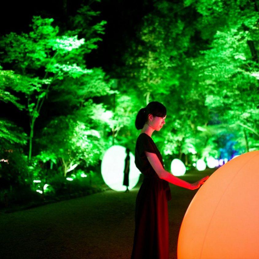 El bosque digitalizado del Santuario Shimogamo 4
