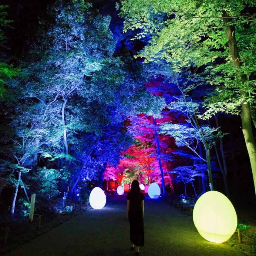 El bosque digitalizado del Santuario Shimogamo 14