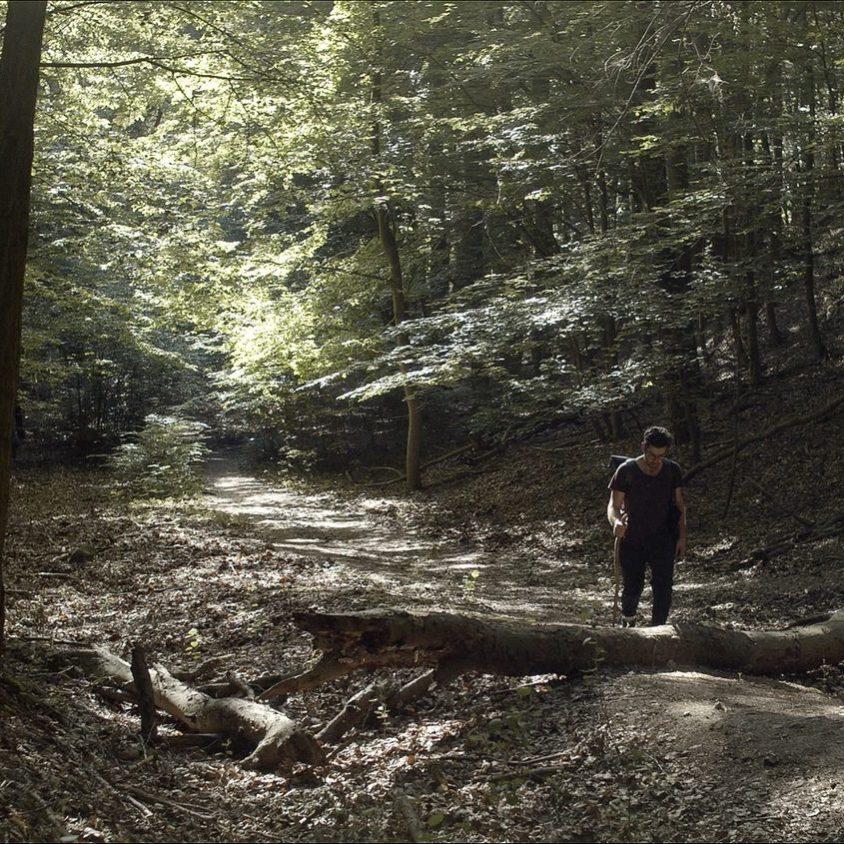 Explorar los sentidos en un bosque artificial 3