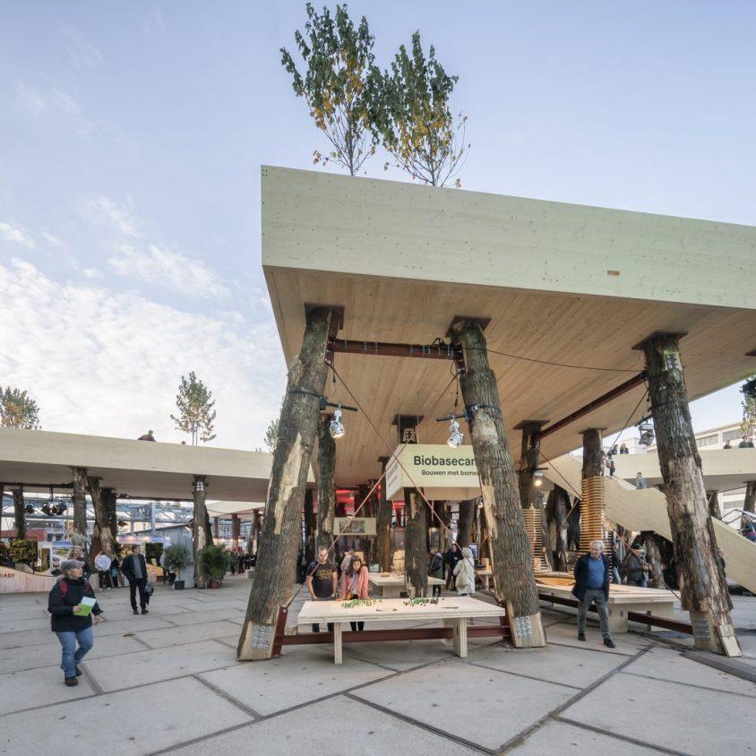 La construcción con madera contra el cambio climático 5