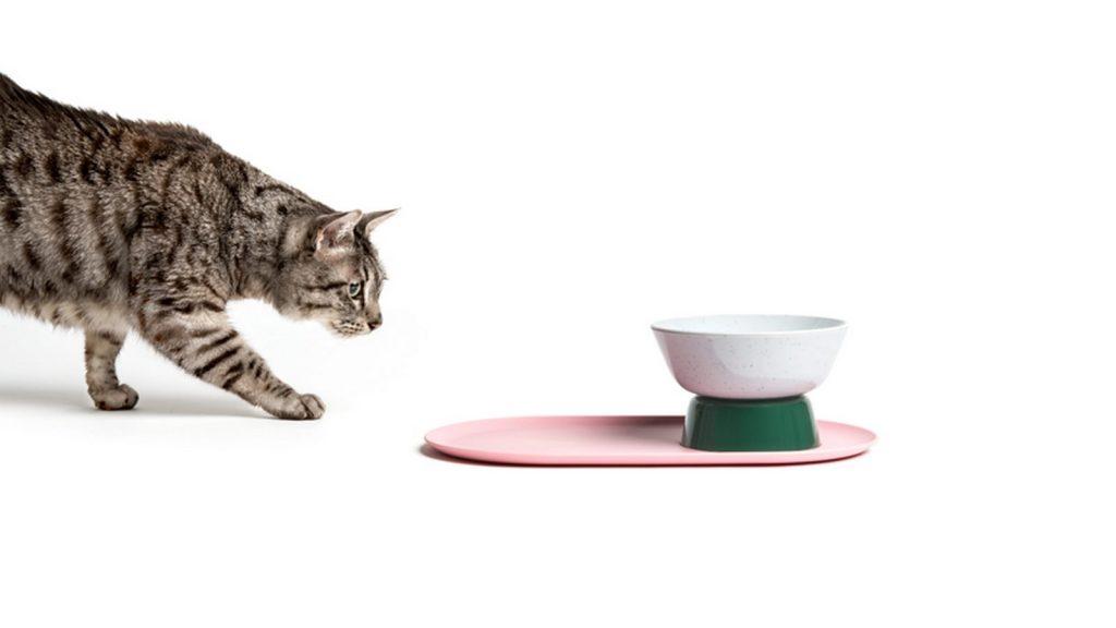 """Cat Person, el nuevo protagonista de """"Layer"""" 18"""